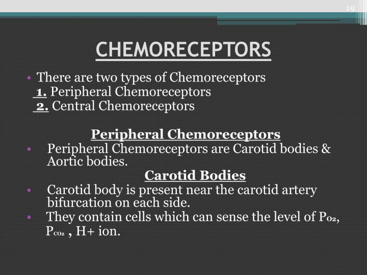 CHEMORECEPTORS