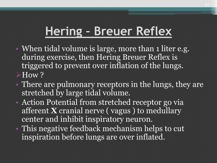 Hering – Breuer Reflex