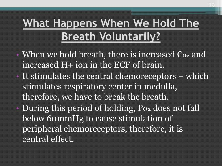 What Happens When We Hold The Breath Voluntarily?
