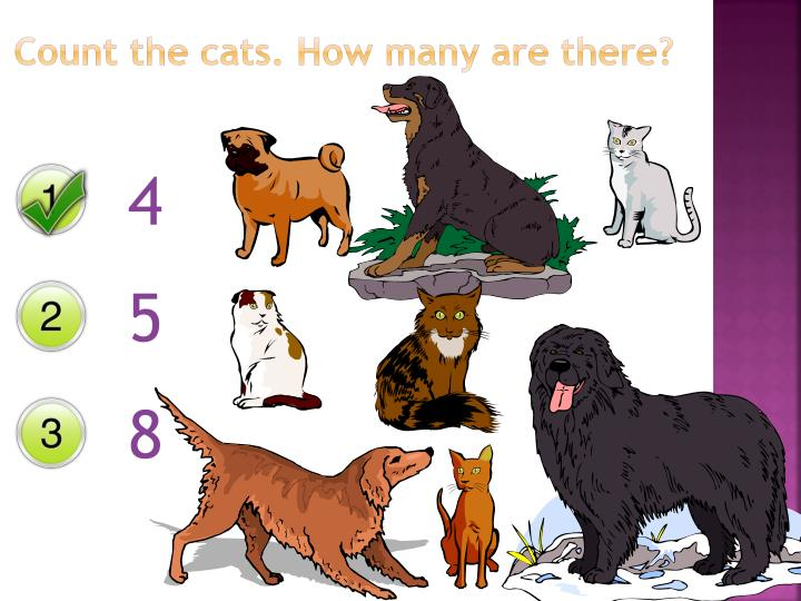 Count the cats. How many are there?