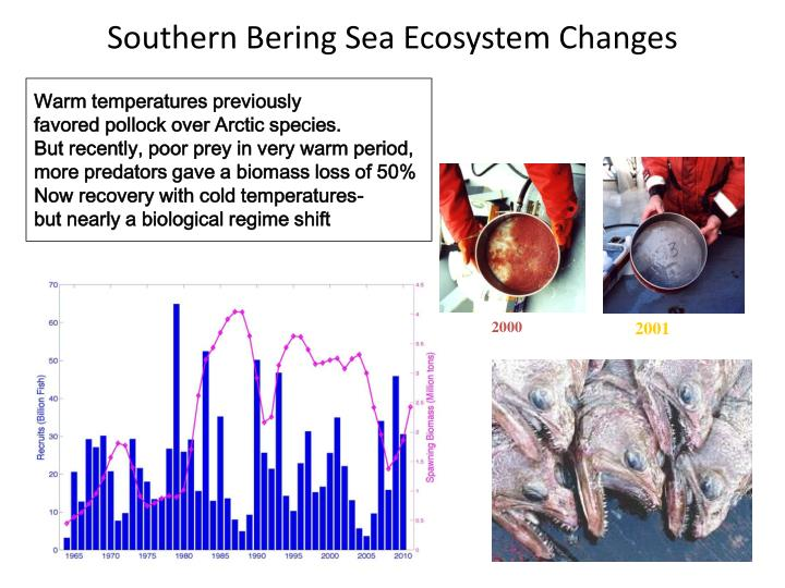 Southern Bering Sea Ecosystem Changes