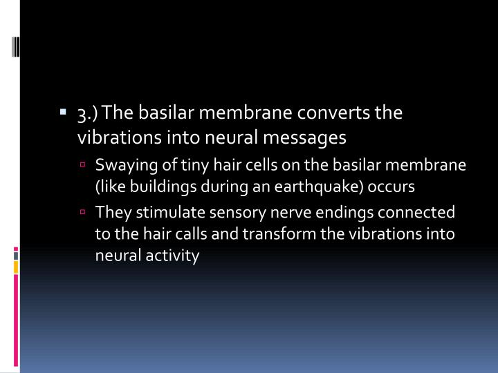 3.) The basilar membrane converts the vibrations into neural messages