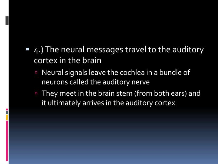 4.) The neural messages travel to the auditory cortex in the brain