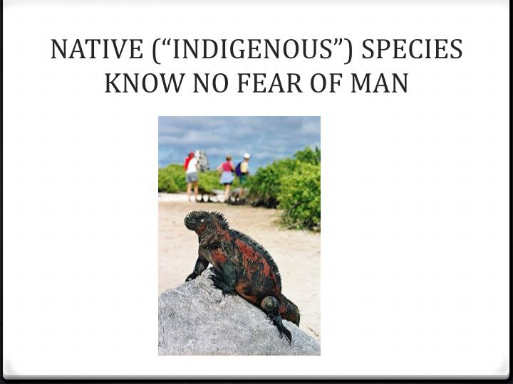 "NATIVE (""INDIGENOUS"") SPECIES KNOW NO FEAR OF MAN"