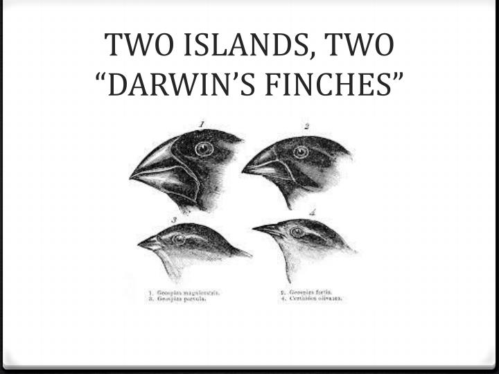 "TWO ISLANDS, TWO ""DARWIN'S FINCHES"""