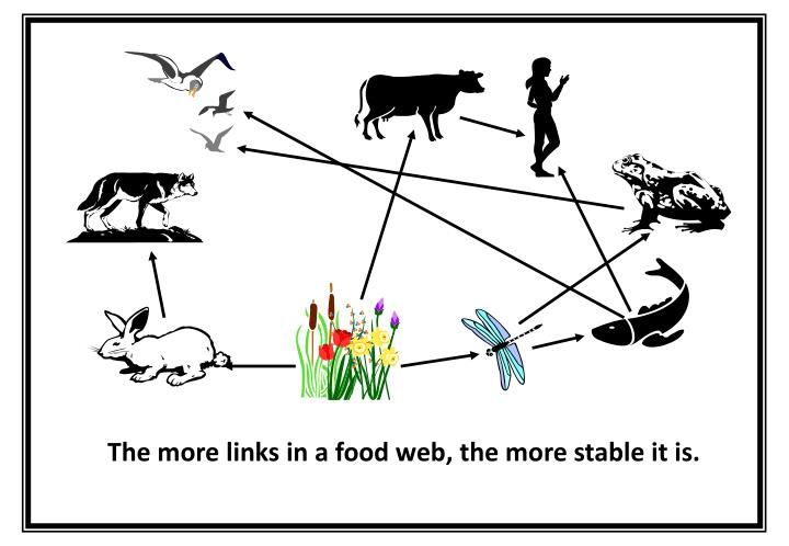 The more links in a food web, the more stable it is.
