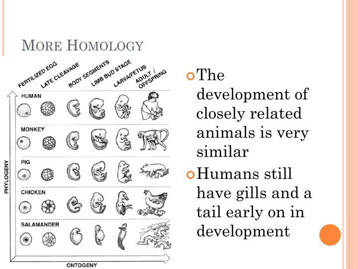 More Homology