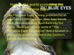 how is the world protecting the philippine eagle