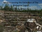 what is causing the extinction of the philippine eagle