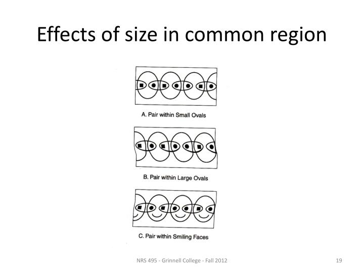 Effects of size in common region