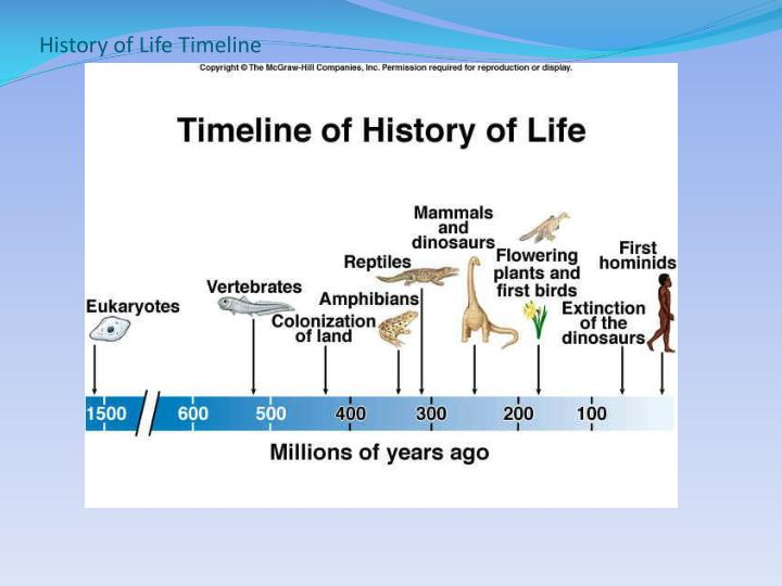 History of Life Timeline