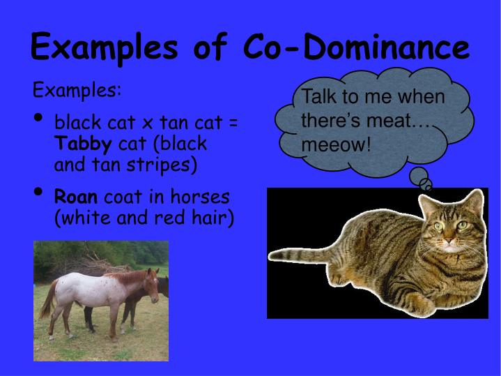 Examples of Co-Dominance
