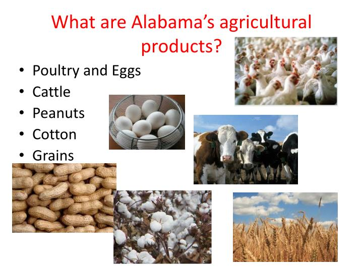 What are Alabama's agricultural products?