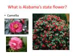 what is alabama s state flower