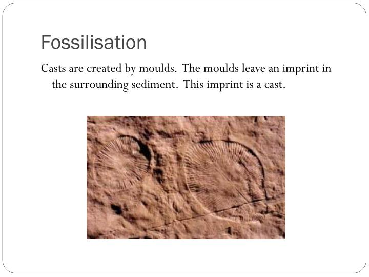 Fossilisation