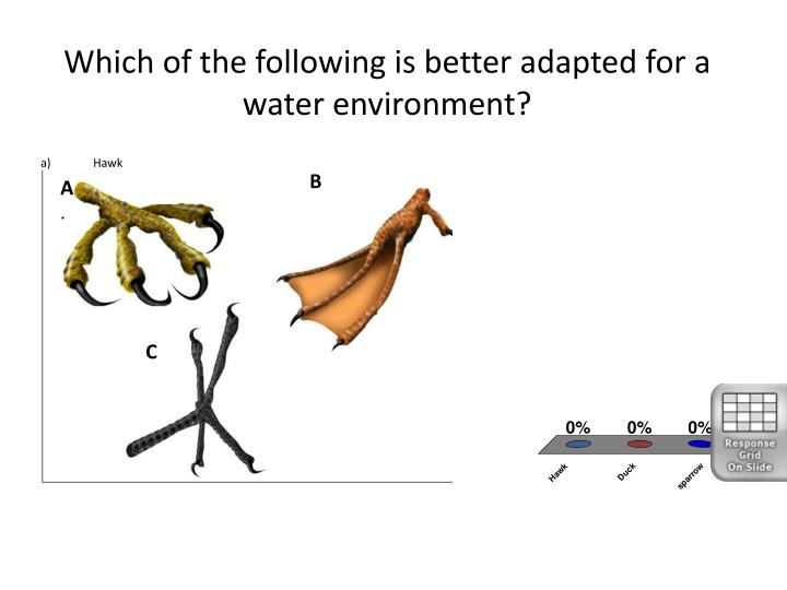 Which of the following is better adapted for a water environment?