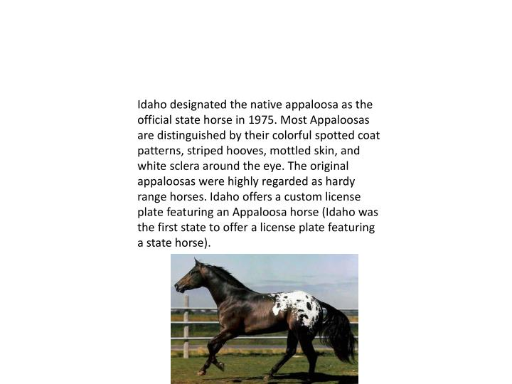 Idaho designated the native appaloosa as the official state horse in 1975. Most Appaloosas are distinguished by their colorful spotted coat patterns, striped hooves, mottled skin, and white sclera around the eye. The original appaloosas were highly regarded as hardy range horses. Idaho offers a custom license plate featuring an Appaloosa horse (Idaho was the first state to offer a license plate featuring a state horse).