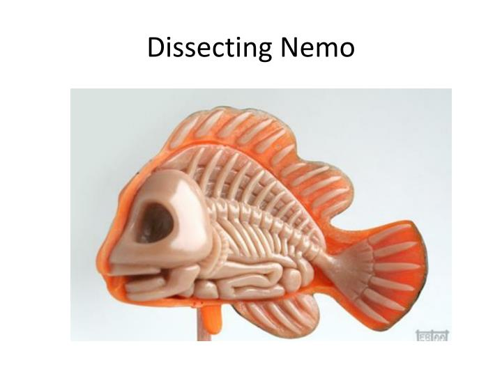 Dissecting