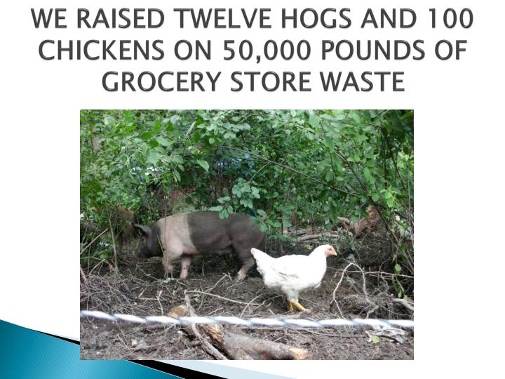 WE RAISED TWELVE HOGS AND 100 CHICKENS ON 50,000 POUNDS OF GROCERY STORE WASTE