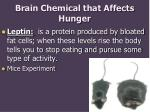 brain chemical that affects hunger
