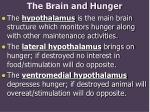 the brain and hunger