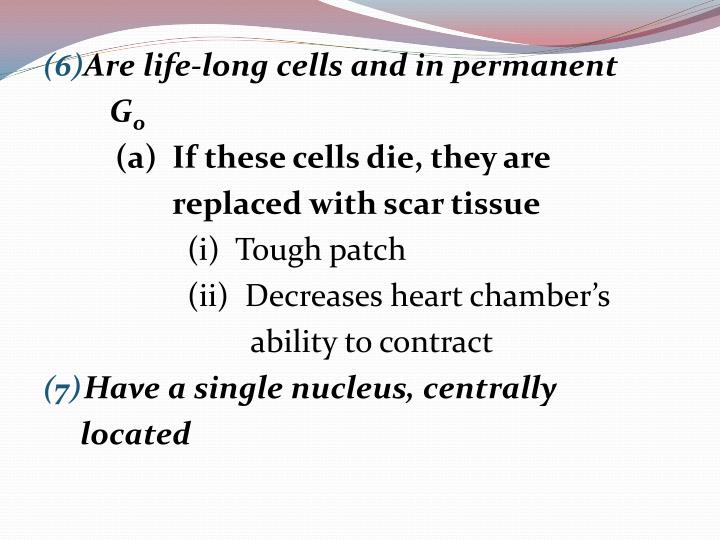 Are life-long cells and in permanent