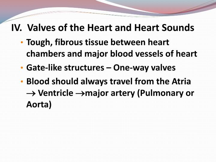 IV.  Valves of the Heart and Heart Sounds