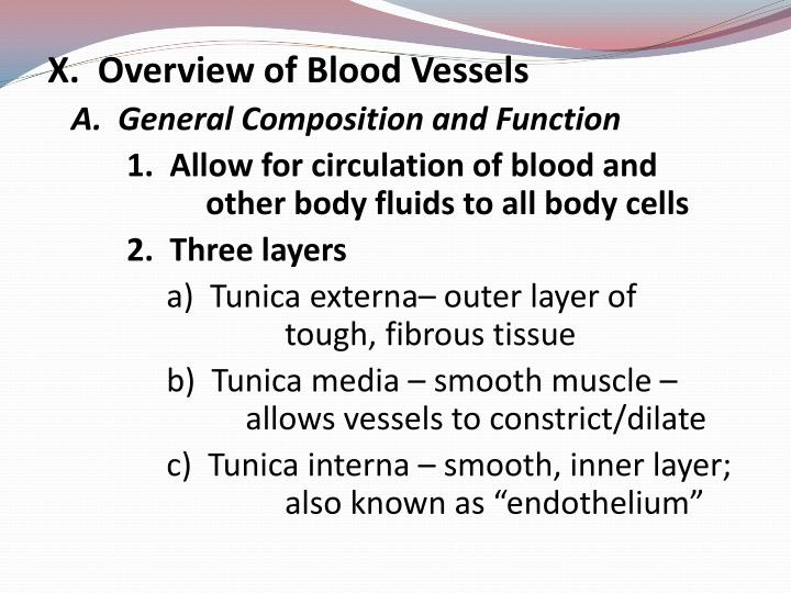 X.  Overview of Blood Vessels