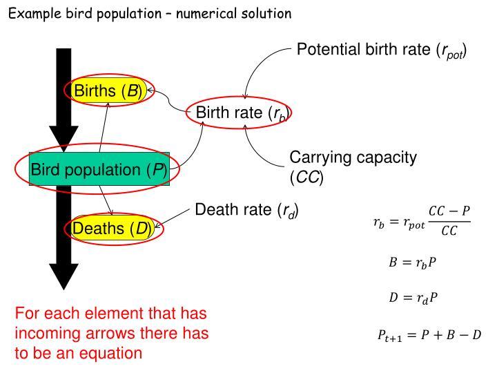 Example bird