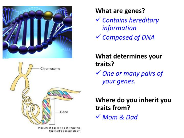 What are genes?