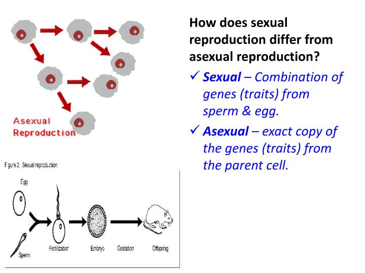 How does sexual reproduction differ from asexual reproduction?
