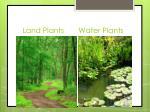 land plants water plants