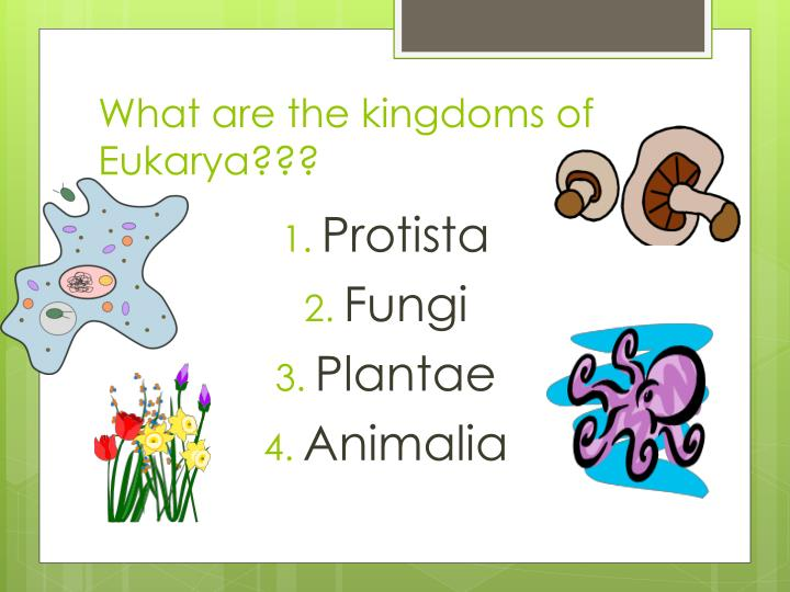 What are the kingdoms of
