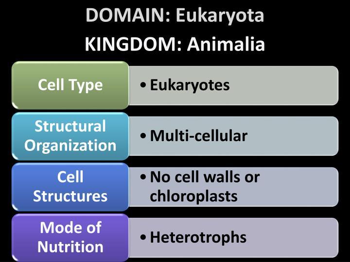 DOMAIN: Eukaryota