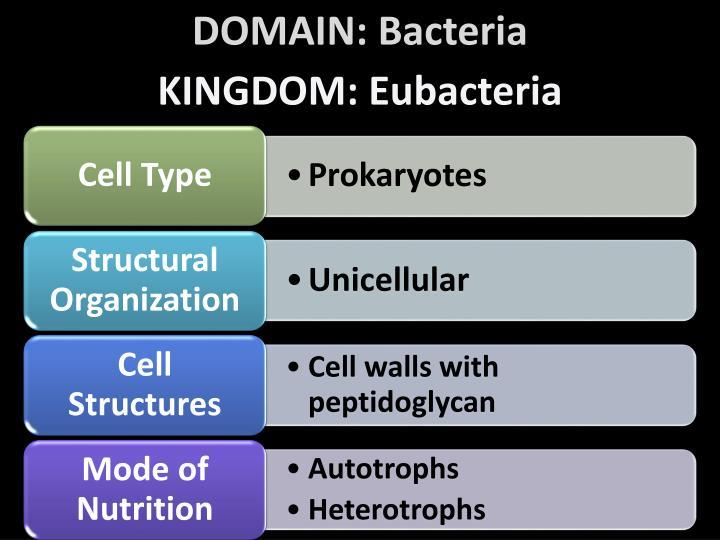 DOMAIN: Bacteria