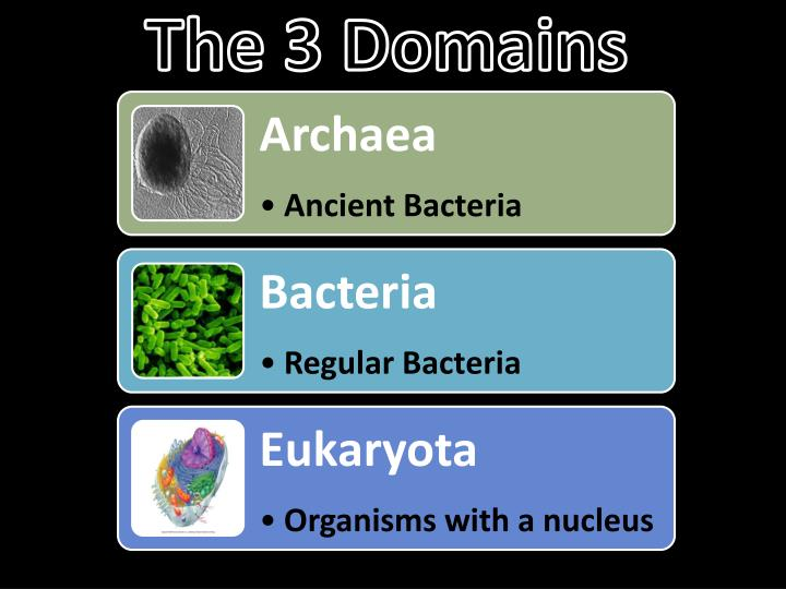 the 3 domains