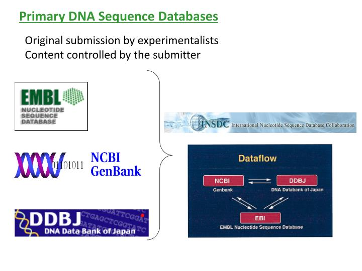 Primary DNA Sequence