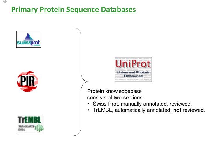 Primary Protein Sequence