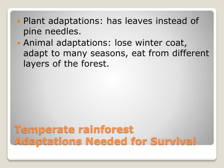 Plant adaptations: has leaves instead of pine needles.