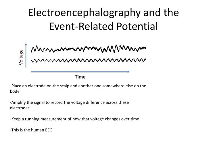 Electroencephalography and the Event-Related Potential