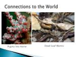 connections to the world