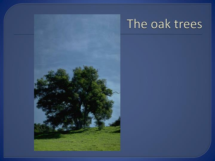The oak trees
