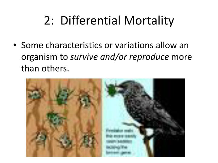 2:  Differential Mortality