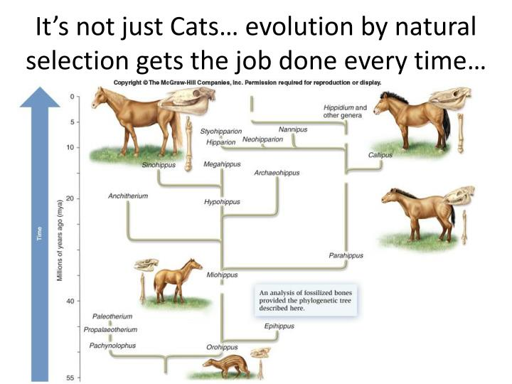 It's not just Cats… evolution by natural selection gets the job done every time…