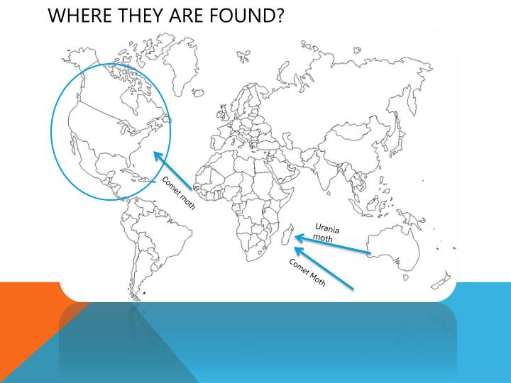 Where they are found?