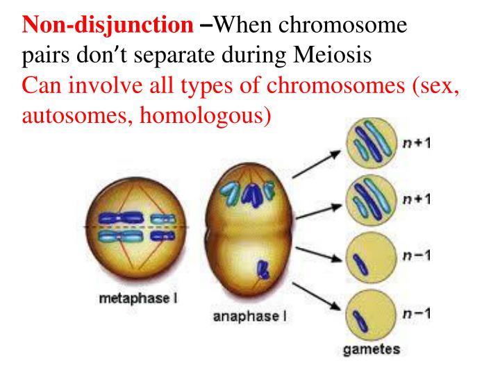Non-disjunction