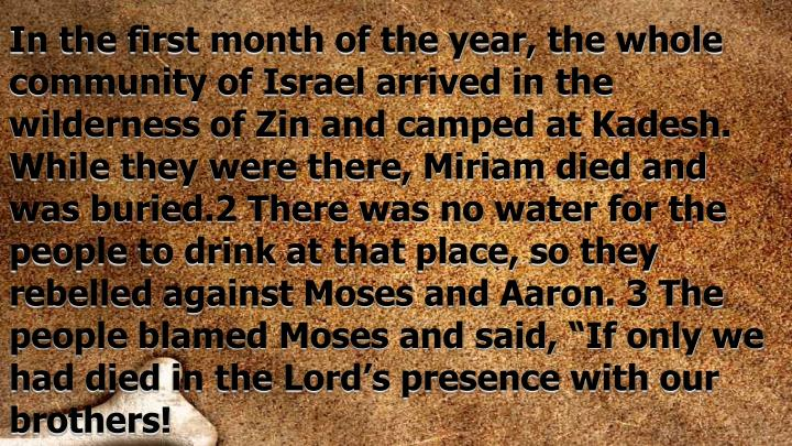 In the first month of the year, the whole community of Israel arrived in the wilderness of