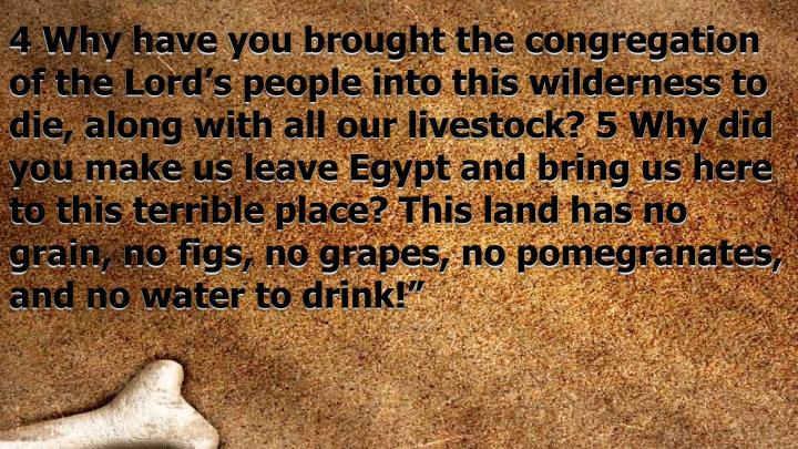 4 Why have you brought the congregation of the Lord's people into this wilderness to die, along with all our livestock? 5 Why did you make us leave Egypt and bring us here to this terrible place? This land has no grain, no figs, no grapes, no pomegranates, and no water to drink!""