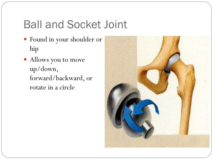 Ball and Socket Joint