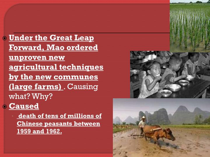 Under the Great Leap Forward, Mao ordered  unproven new agricultural techniques by the new communes (large farms)